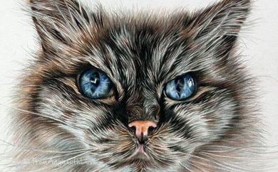 Pollyanna - Coloured Pencil Ragdoll Cat Portrait