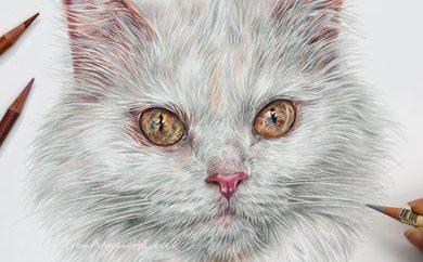 Minou - Coloured Pencil Cat Portrait by Angie