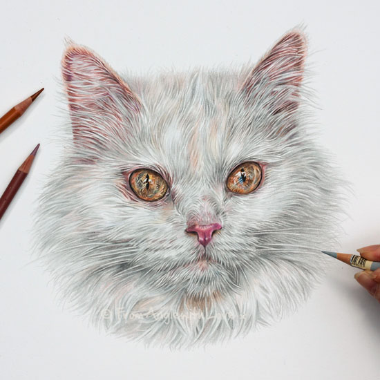 Minou - Coloured Pencil Cat Portrait by Angie