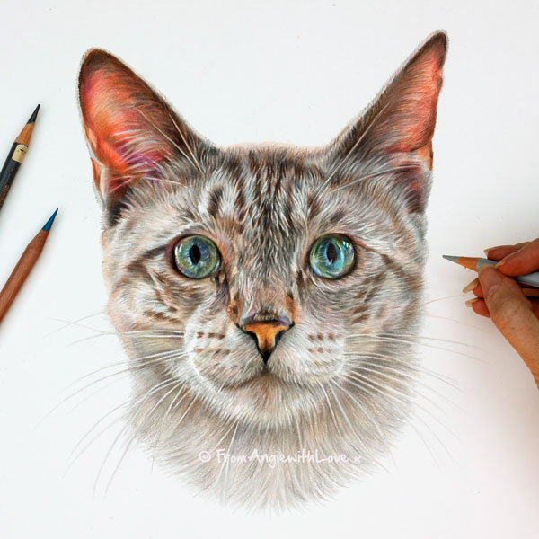 Monty - Siamese Cat Portrait by Coloured Pencil Artist Angie x
