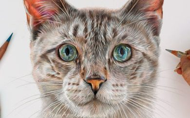 Monty - Siamese Cat Portrait by Coloured Pencil Artist Angie