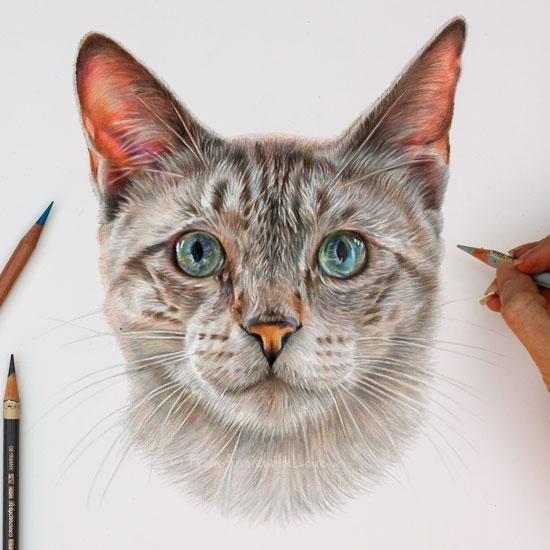 Pencil Portrait Artist Monty - Siamese Cat Portrait by ...
