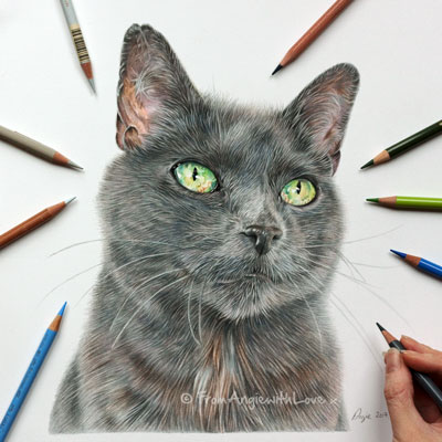 Sage - Coloured Pencil Cat Portrait by Angie x