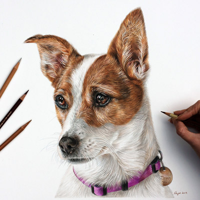 Meggy - Jack Russell Terrier Coloured Pencil Portrait by Angie.