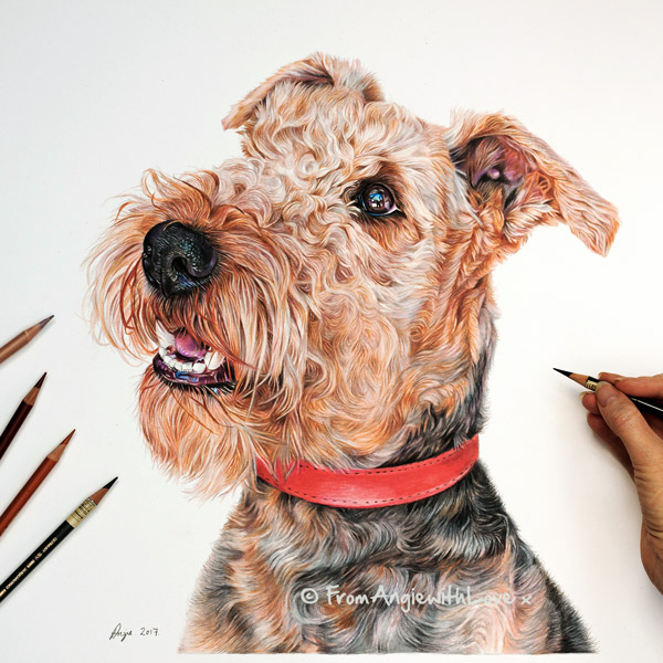 Trevor - Airedale Terrier Coloured Pencil Portrait by Angie.