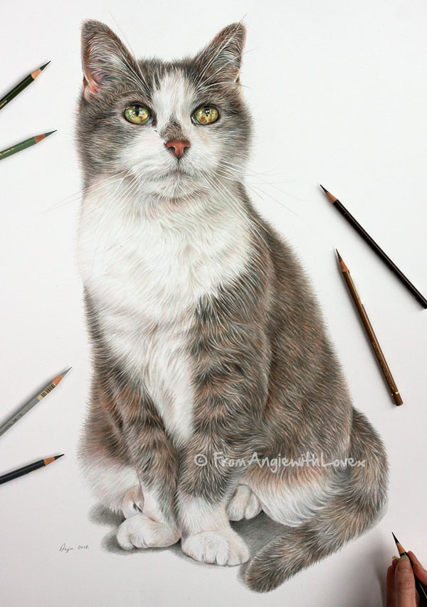 Cupcake - Coloured Pencil Cat Portrait by Angie.