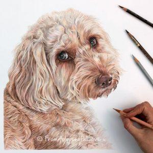 Khalee - Apricot Roan Cockapoo Portrait by Coloured Pencil Artist Angie.