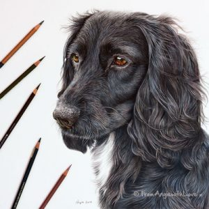 coloured pencil dog portraits