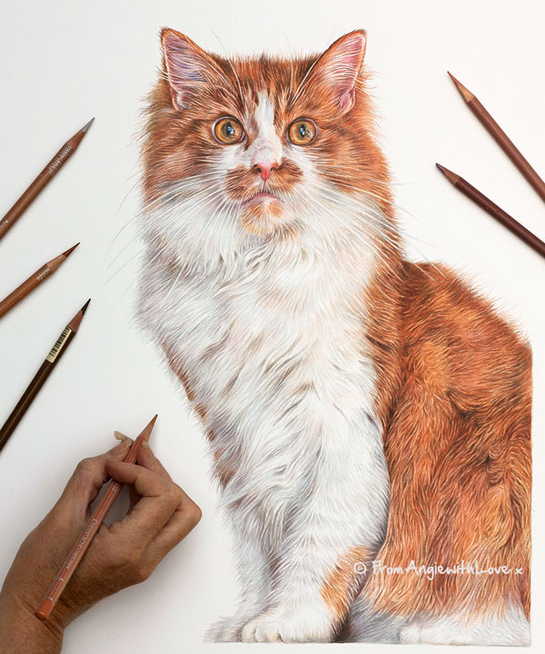 Oscar - Coloured Pencil Cat Portrait by Angie x