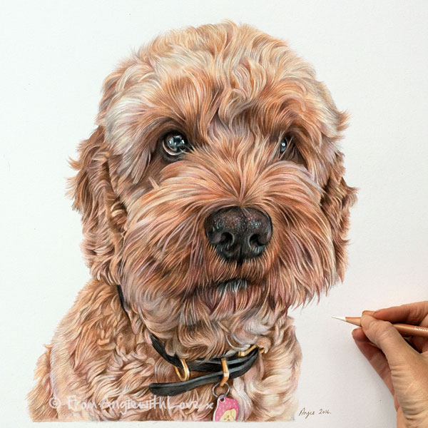 Freddie - Cockapoo Coloured Pencil Portrait by Angie.
