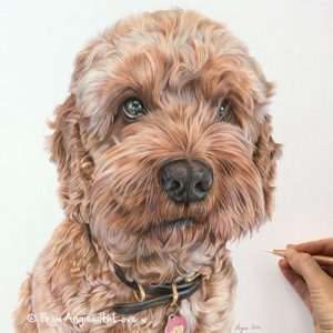 Freddie - Cockapoo Coloured Pencil Portrait by Angie