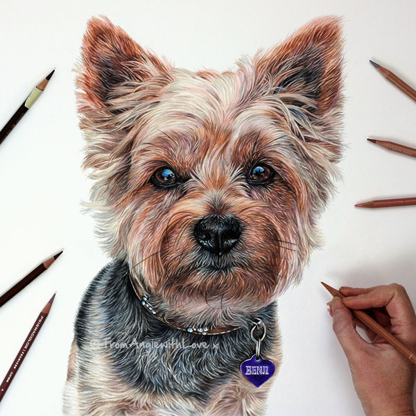 Benji - Coloured Pencil Yorkshire Terrier Portrait by Angie x
