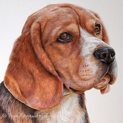 BoB - Coloured Pencil Beagle Portrait by Angie x