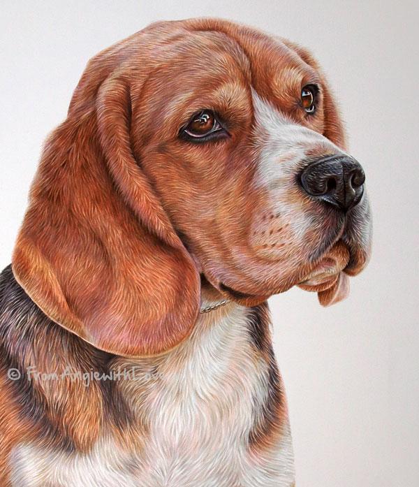 BoB - Coloured Pencil Beagle Portrait by Angie x