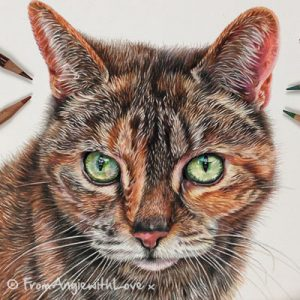 Emmy - Cat Portrait by Coloured Pencil Artist Angie x