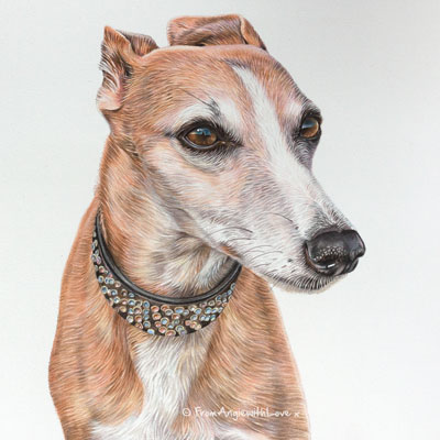 Hilda - Coloured Pencil Whippet Portrait by Pet Portrait Artist Angie