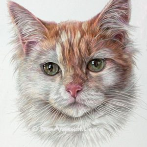 Izzie - Coloured Pencil Cat Portrait by Angie x