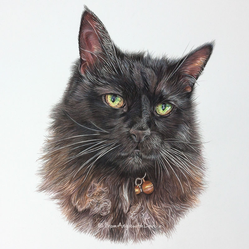 Willow - Coloured Pencil Cat Portrait by Angie