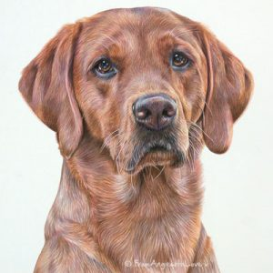 Trupa - Fox Red Labrador Portrait by Pet Portrait Artist Angie