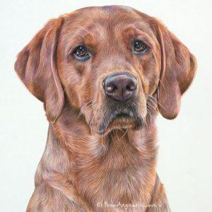 Trupa - Fox Red Labrador Portrait by Pet Portrait Artist Angie