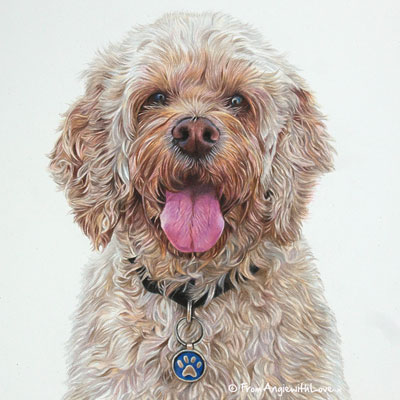 Alfie - Coloured Pencil Cockapoo Portrait drawn by Pet & Wildlife Artist Angie