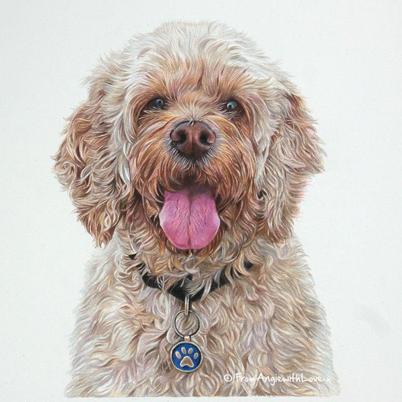 Alfie - Coloured Pencil Cockapoo Portrait drawn by Pet & Wildlife Artist Angie