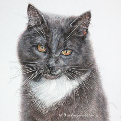 Anne Cath - Coloured Pencil Cat Portrait by Pet Artist Angie