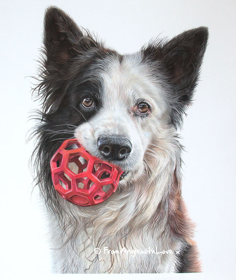 Chinook - Border Collie Pastel Portrait