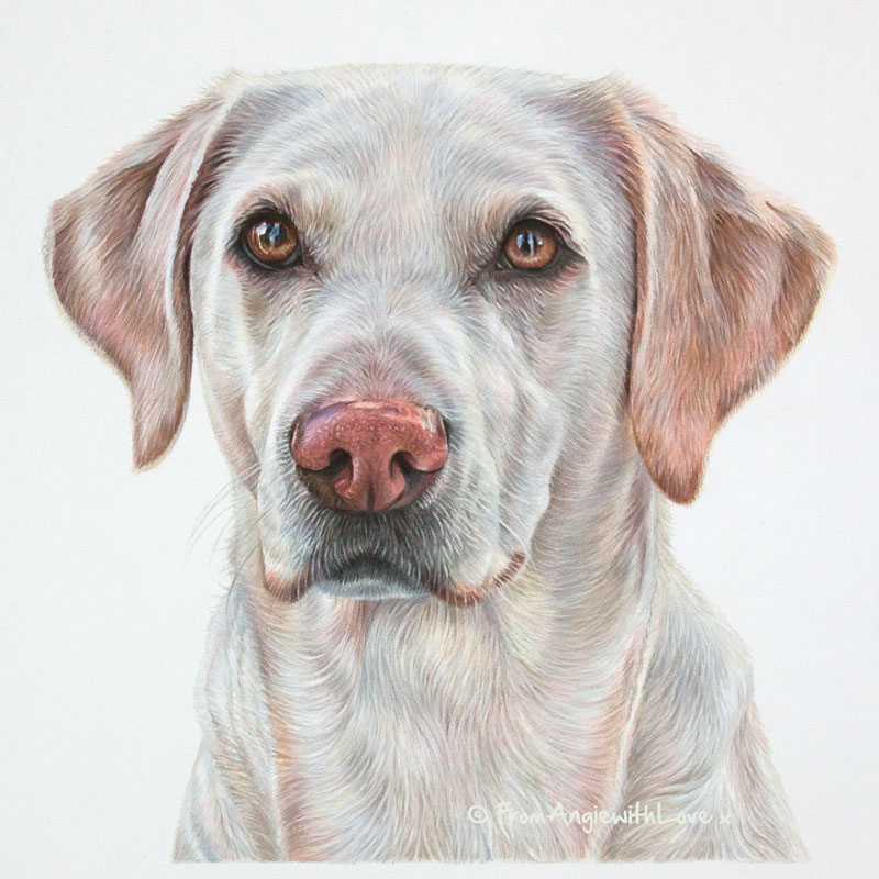 Lilly - Coloured Pencil Golden Labrador Retriever Portrait by Pet Artist Angie
