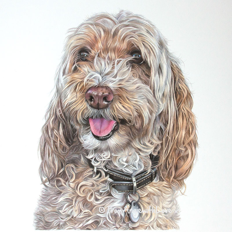 Oscar - Coloured Pencil Cockapoo Portrait