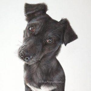 Rascal - Coloured Pencil Patterjack Portrait by Pet Artist Angie