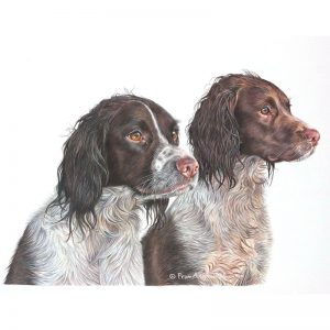 Bubba & Kona - English Springer Spaniel Portrait by Pencil Artist Angie