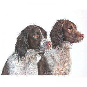 Bubba & Kona - English Springer Spaniel Portrait by Pencil Artist Angie