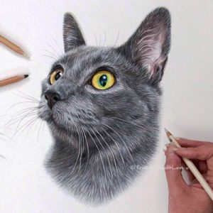 Koshka - Russian Blue Cat Portrait by Pet Portrait Artist Angie