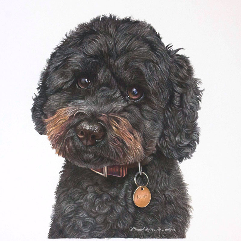 Ruby - Cockapoo Pastel Portrait by Pet & Wildlife Artist Angie