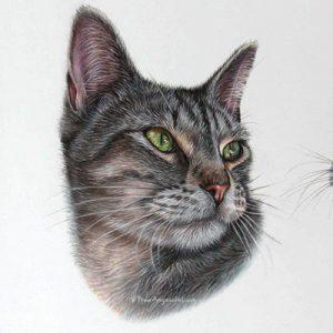 Yeva - Tabby Cat Portrait in Pastel by Pet & Wildlife Artist Angie