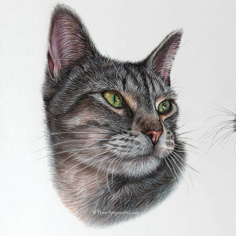 Yeva - Tabby Cat Portrait in Pastel by Pet & Wildlife Artist Angie