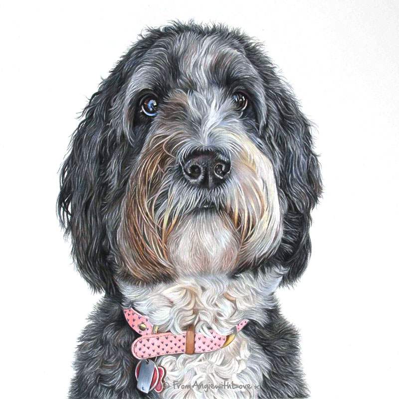 Bella - Bernedoodle Portrait by Pet & Wildlife Artist Angie