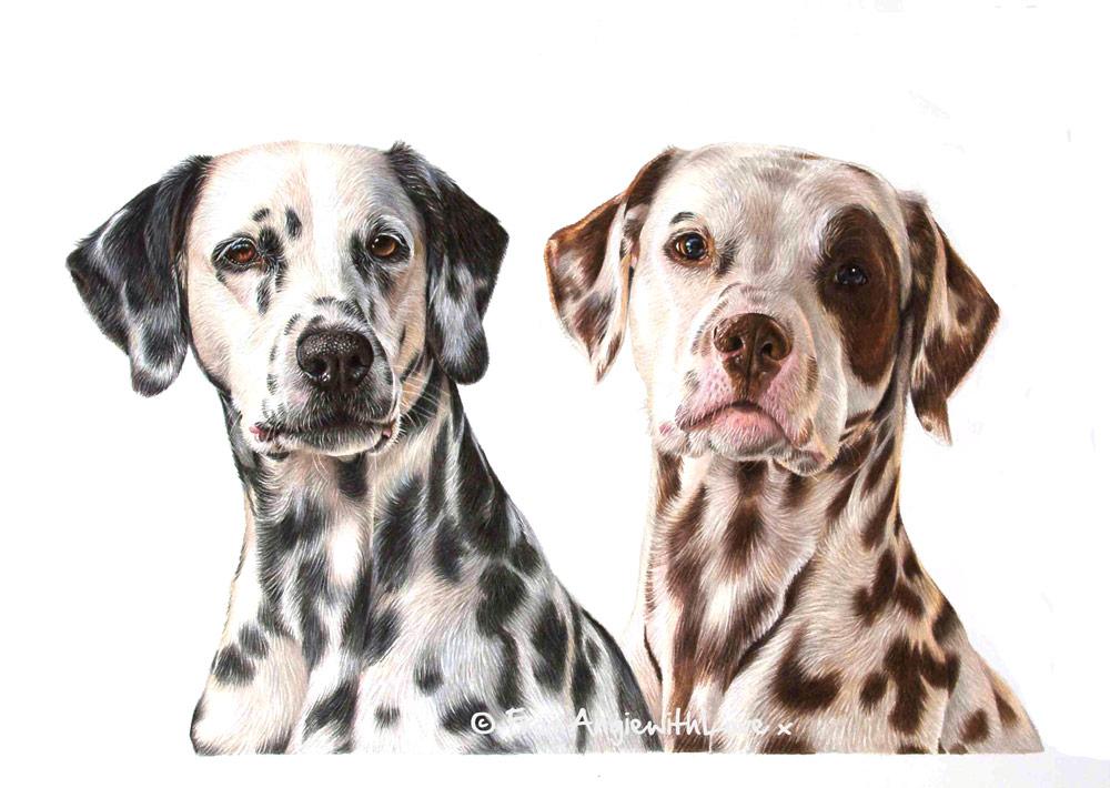 Jente & Simen - Coloured Pencil Dalmation Portrait by Pet & Wildlife Artist Angie.