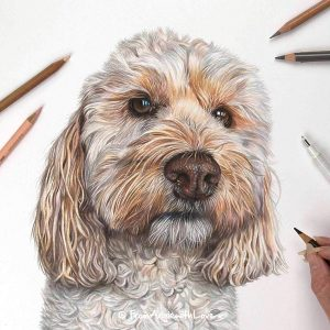 Tilly - Coloured Pencil Cockapoo Portrait by Pet & Wildlife Artist Angie
