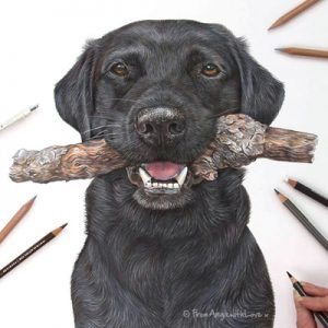 Harvey - Black Labrador with Stick Coloured Pencil Portrait by Pet and Wildlife Artist Angie