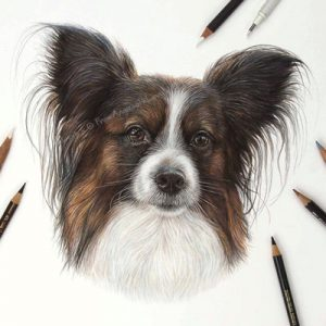 Louis - Coloured Pencil Papillon Portrait by Pet & Wildlife Artist Angie