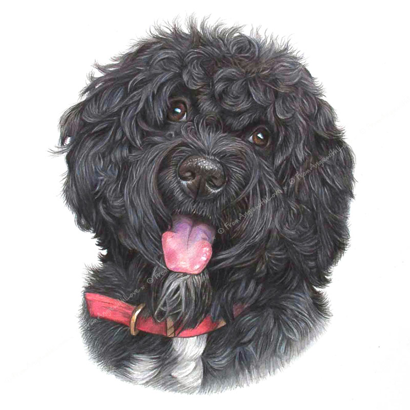 Pepper - Portuguese Water Dog Portrait by pet & wildlife artist Angie