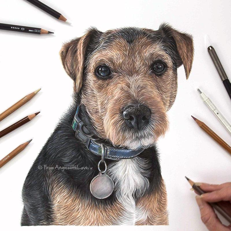 Baxter - Coloured Pencil Terrier Portrait by Pet & Wildlife Artist Angie