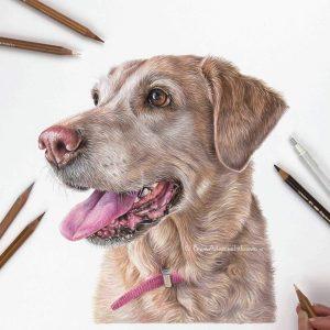 Jess - Labrador Retriever Portrait by Pet & Wildlife Artist Angie x