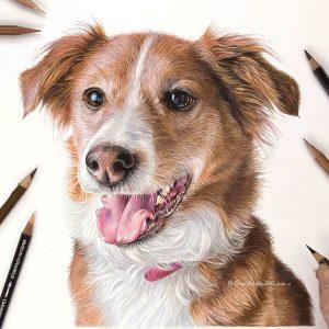 Meg - Coloured Pencil Dog Portrait by Pet & Wildlife Artist Angie x