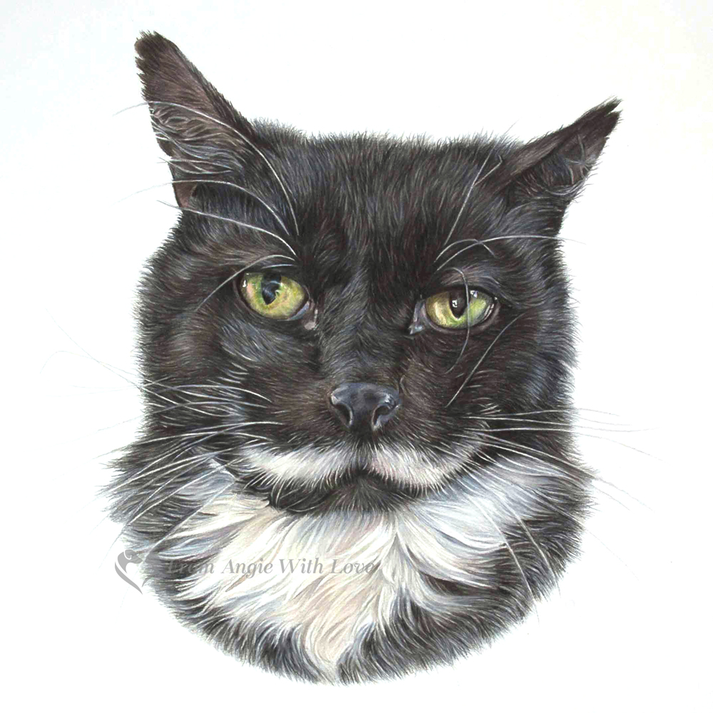 Joker - coloured pencil cat portrait by pet & wildlife artist Angie