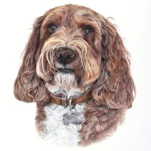 Buddy - Coloured Pencil Cockapoo Portrait by Pet & Wildlife Artist Angie.